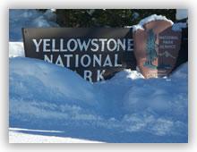 yellowstone1s